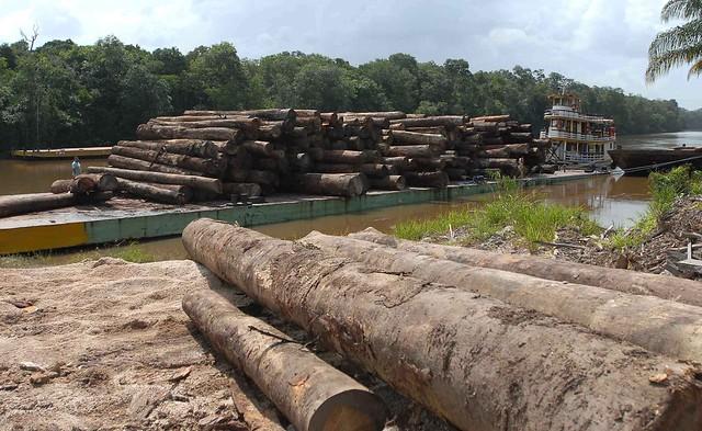 Plano propõe políticas para reverter maior desmatamento da Amazônia dos últimos anos