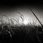 Grasshopper's Sunset