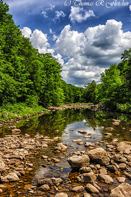 Williams River Spring