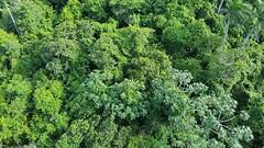 teleferico trees