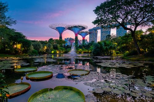 sunset gbtb singapore gardensbythebay garden
