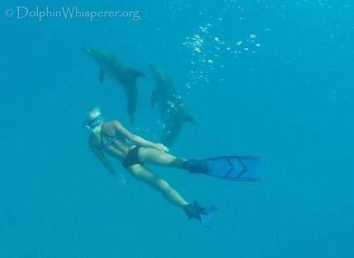 Dolphin Whisperer Bimini Dolphins 5.7 (43)