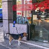 Waiting time canino #perro #dog #ciudad #city #day #dia #buenosaires #igers #igersbsas #latergram