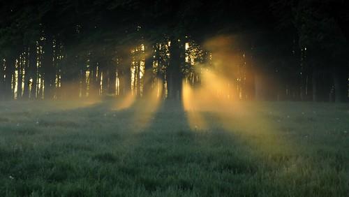 Lichtspiele - morgens beim Weiden-Check; Bergenhusen, Stapelholm (10a)