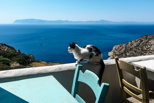 _DSF2932 - Chat devant Amorgos