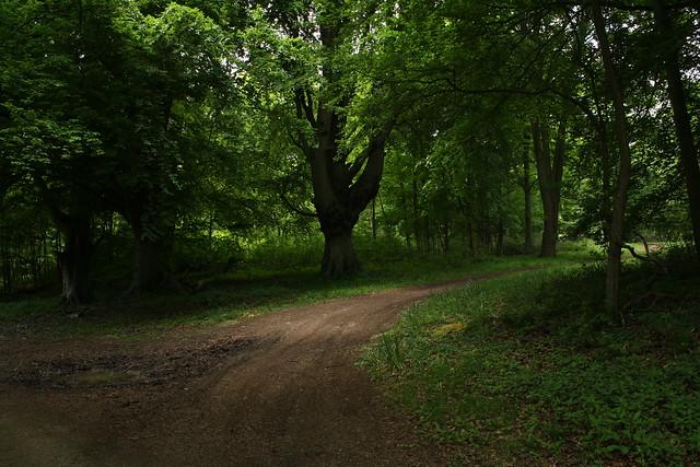 Wytham Wood
