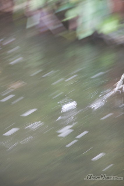 basilisc lizard 0004 Corcovado, Osa peninsula, Costa Rica