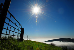 Sunshine above coastal for, Ventura, California