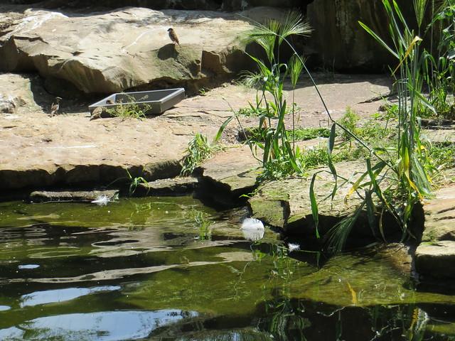 00738750 Berliner Zoo 5, Canon POWERSHOT SX260 HS