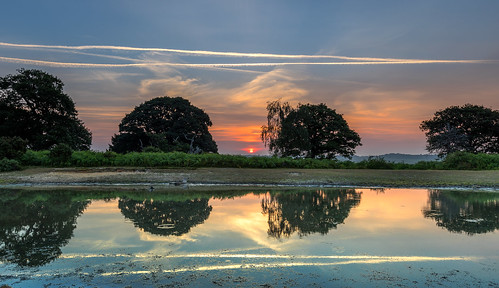 newforest landscape mogshade pond water reflection sun sunrise cloud