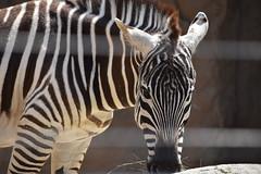 san diego zoo group 4 DSC_0422