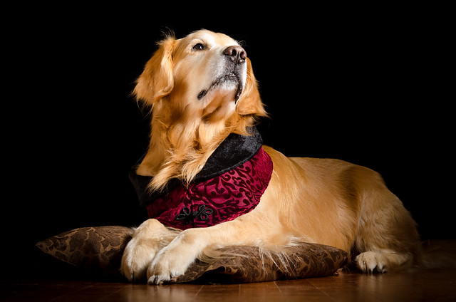The Elegant Dog 26/52