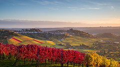 Vineyards around Grabkapelle on Rotenberg, Stuttgart