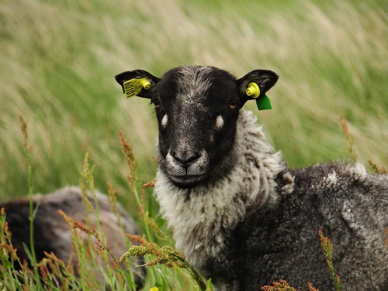 Portrait with earrings =