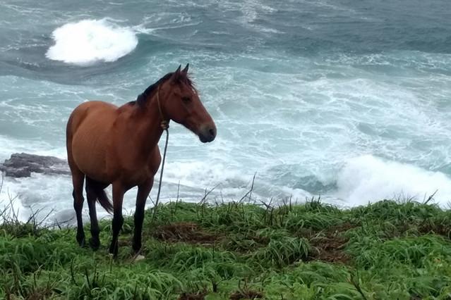 horse-by-ocean