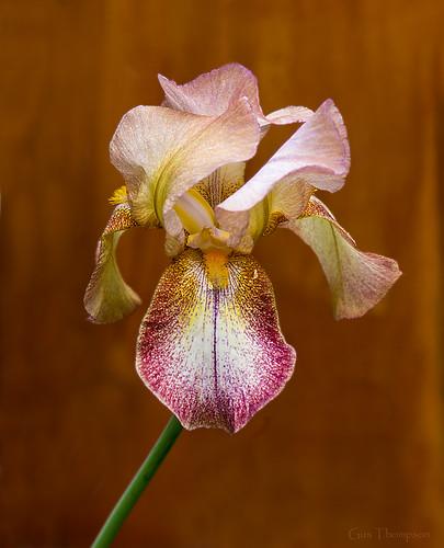 flower fleur beauty