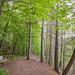 Hiking Trail at Banning State Park, Minnesota