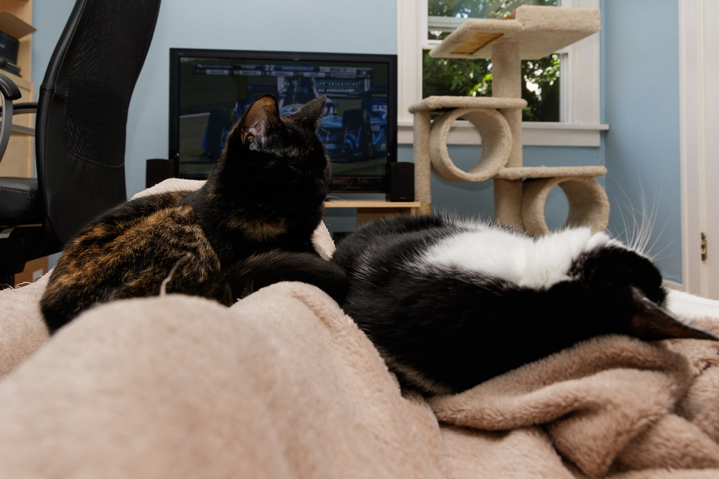 Our cats Trixie and Boo sleep in my lap while an Indycar race is on TV in the background