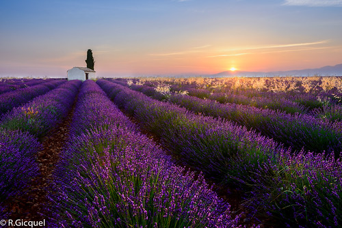 sunrise sun provence lavender lavande france europe landscape dream flowers fields trip purple blue morning nikon d800 1635mm renan gicquel renan4 valensole manosque