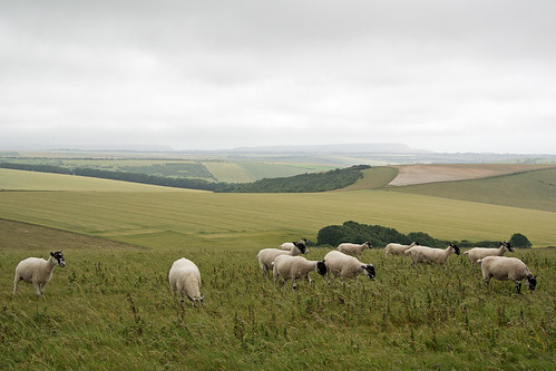 South Downs Way