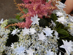 drum and bass astilbe