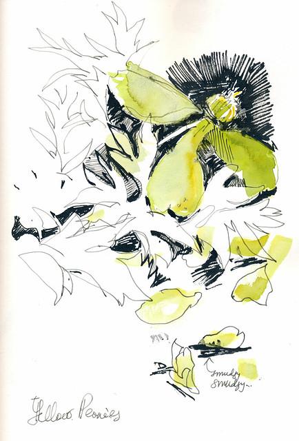 Sketchbook #104: Peonies