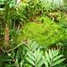Tacuba / Parque Bicentario - Orchid House /