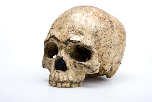 Liujiang Skull Homo sapiens, from Australian Museum