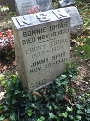 Bonnie Briar and Jimmy Spot at Hartsdale Pet Cemetery.