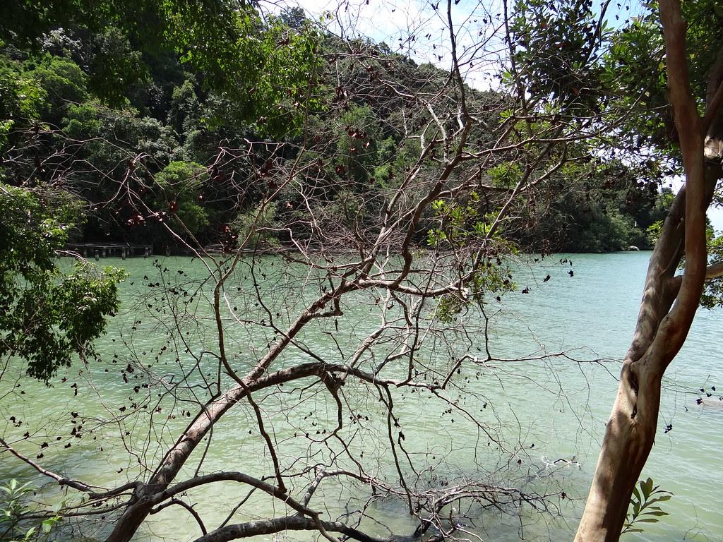 Penang National Park (Taman Negara Pulau Pinang) - Penang - Malaysia - 01
