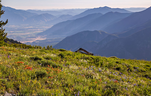 Hazy Mountains & Wildflowers