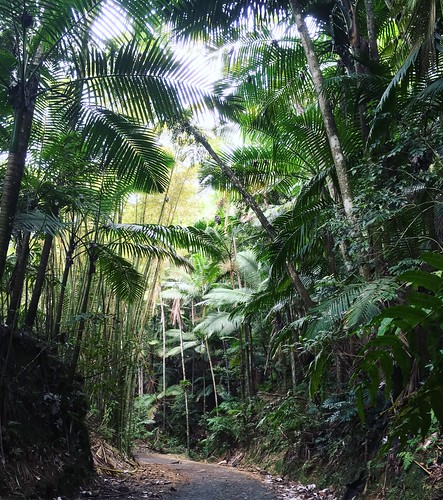 rainforest hiking