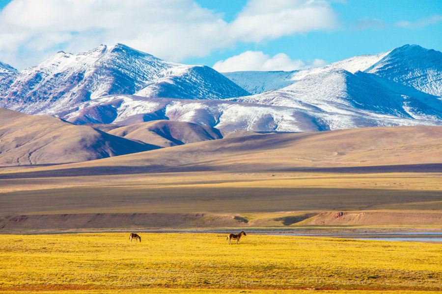 Qinghai Hoh Xil photo Han Jiajun