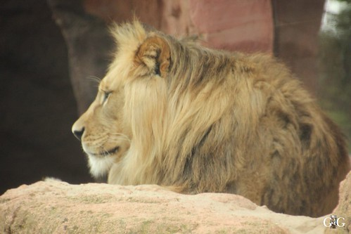 Besuch Zoo Hannover 25.06.201731