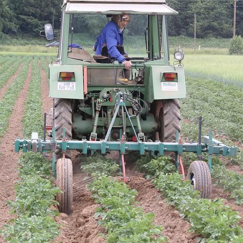 kartoffel bioland ökolandbau arbeit bauern landwirtschaft
