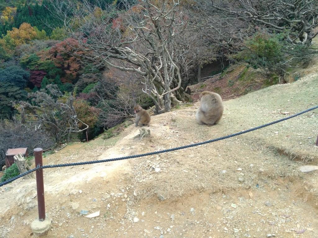 Arashiyama kyoto monkey 4