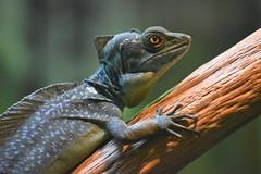 san diego zoo group 4 DSC_0894