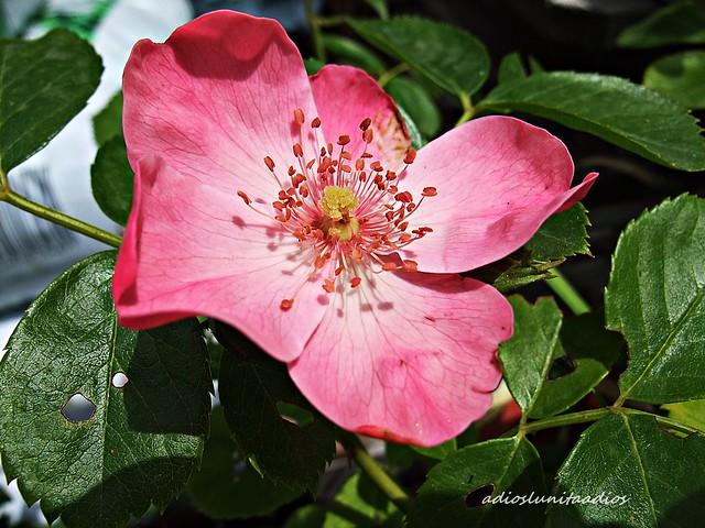 Momentos rosa.001, Fujifilm FinePix F200EXR