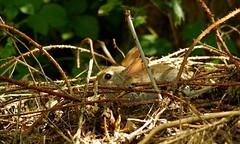 HolderHiding wild rabbit (2)