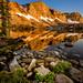 Medicine Bow Peak, Lake Marie, Flowers #4