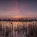 Sonnenuntergang Fischerhuder Wümmeniederung by Matthias.Kahrs