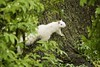 The elusive White Squirrel of Trinity Bellwoods (in my neighbourhood)