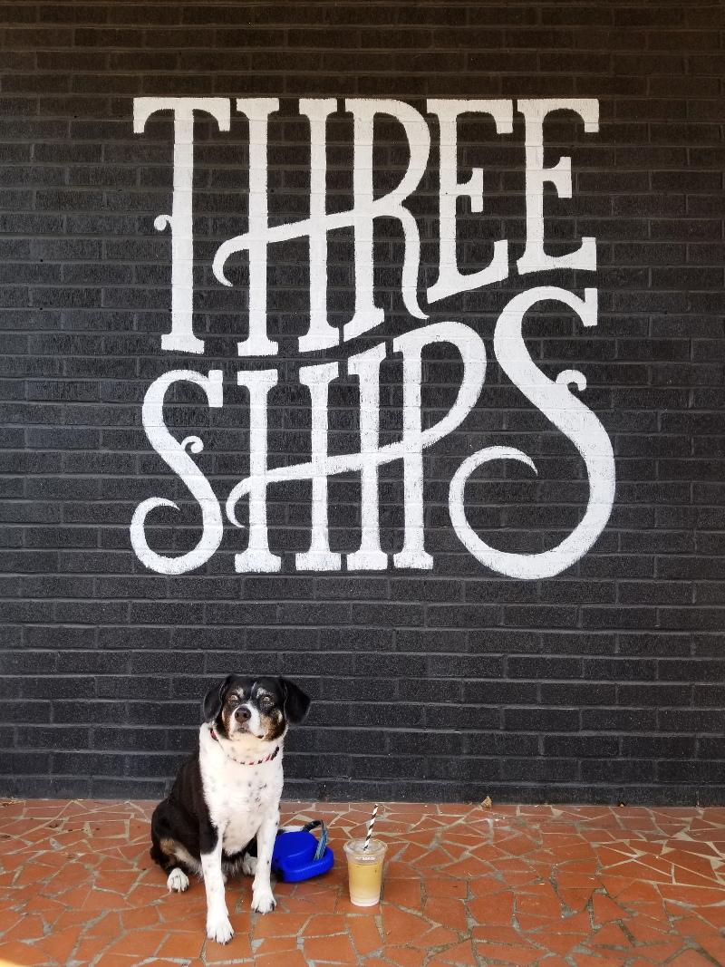 three-ships-coffee-dog-13
