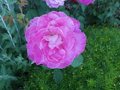 Flowers Missoula Montana RV Park (4)