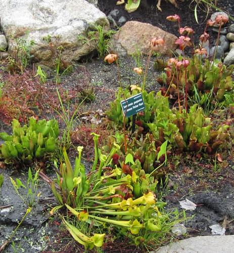 Coastal Maine Botanical Gardens 2011