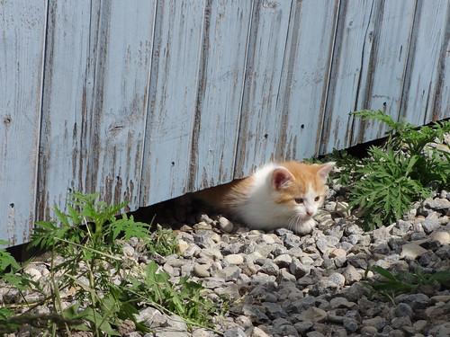 Waif's Kittens 7 weeks