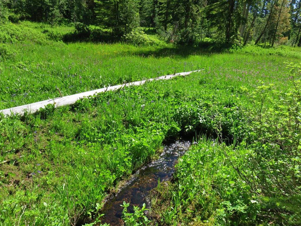 Meadow along the Rho Ridge Trail