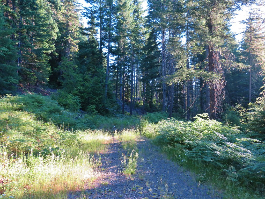 Closed road 120 which leads to the Big Bottom unit of the Clackamas Wilderness