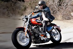 Harley-Davidson XL SPORTSTER 1200 CUSTOM 2017 - 17