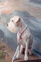 Pastel wall, pastel leash, pastel collar, pastel love!
